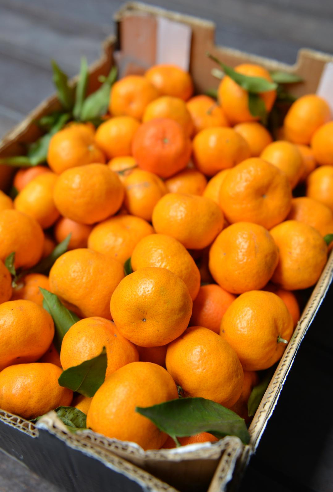 vertical-laranjas